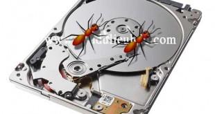 kiến chui vào bên trong ổ cứng